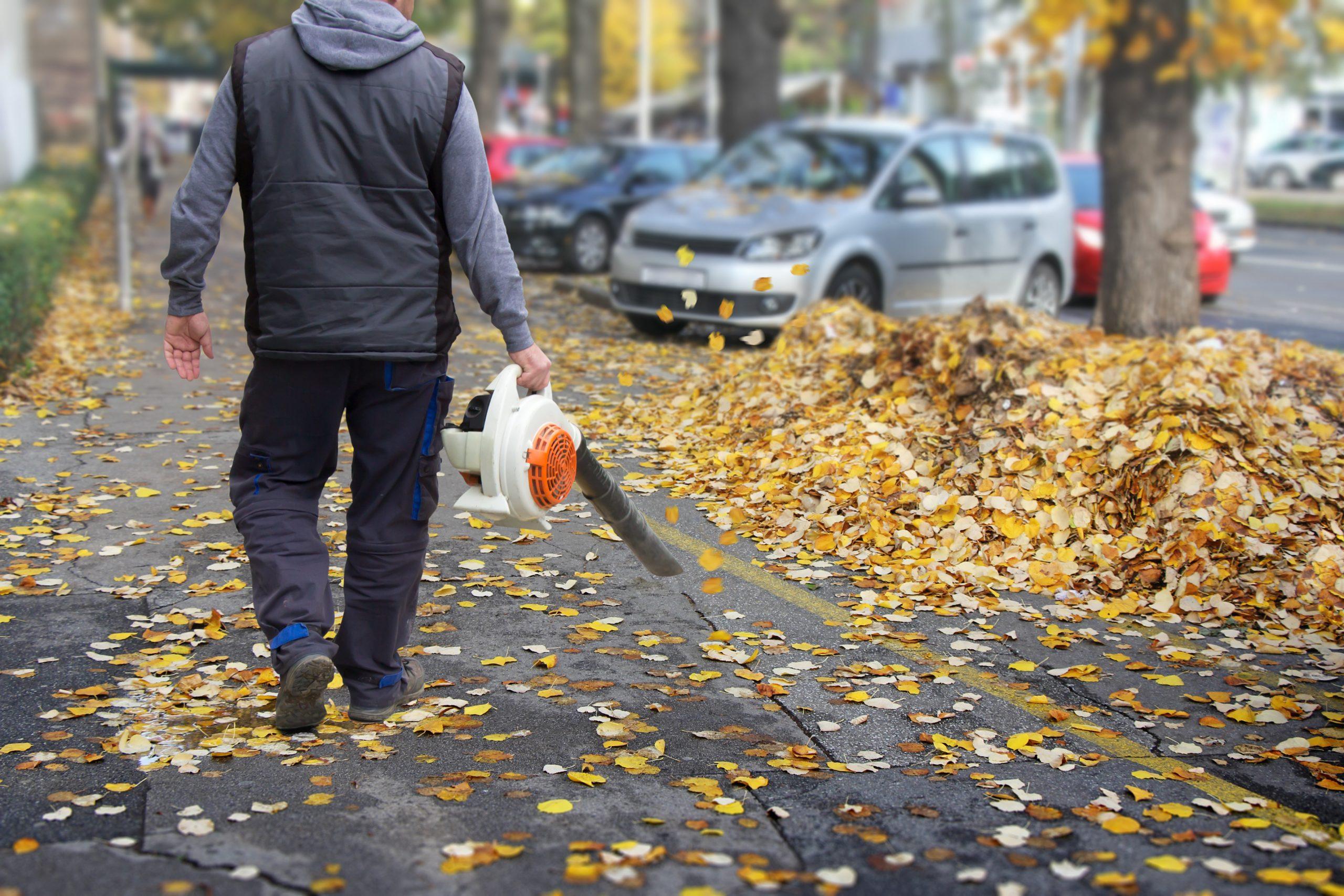 Leaf Cleanup - Curbside Leaves Pick Up